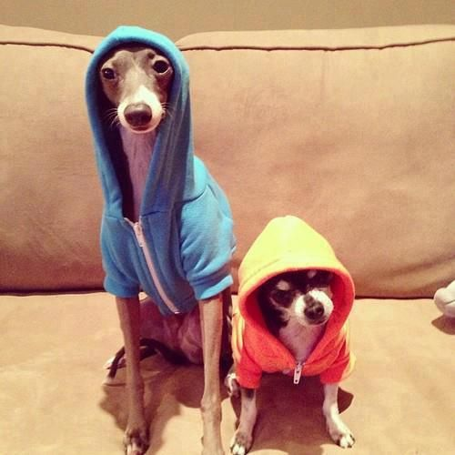 Image result for jenna marbles dogs