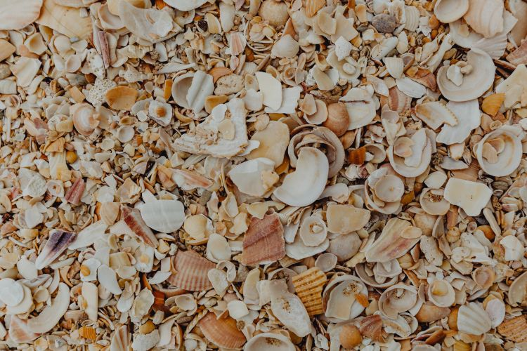 Sea shells on the beach, Algarve, Portugal